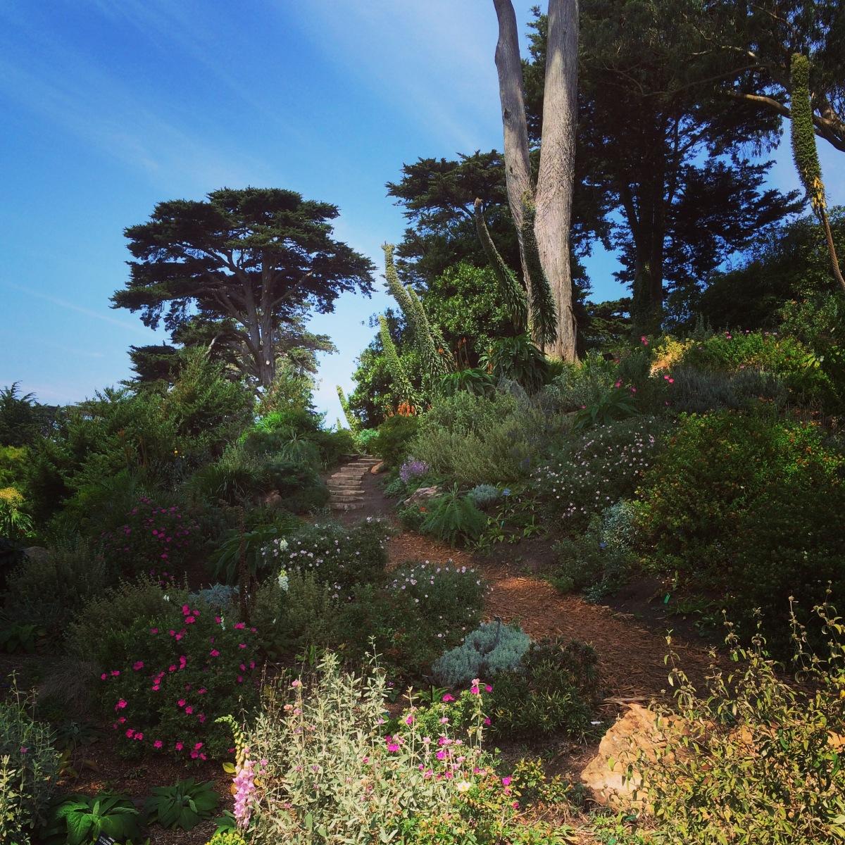 Botanic Gardens Golden Gate Park San Francisco Bulldog Travels