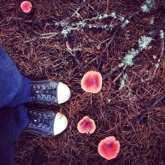 shoes mushroom