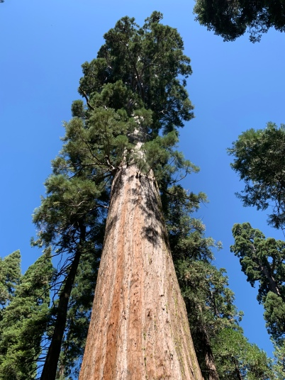 It's unimaginable how large these amazing trees are